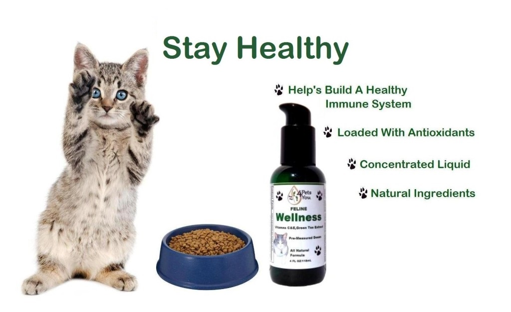 Cat Supplements Online- Feline Wellness