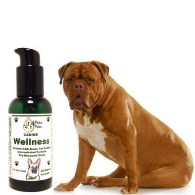 Canine Wellness