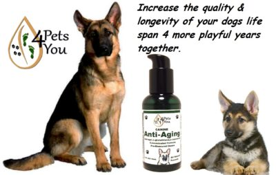 Young & Old Greman Shppards with Anti Aging Supplements for Dogs