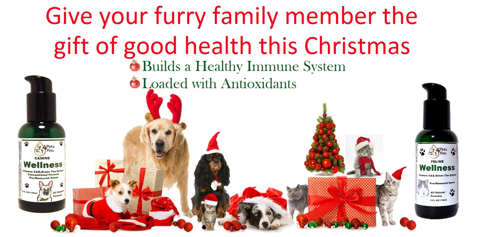 christmas-animals-with-wellness